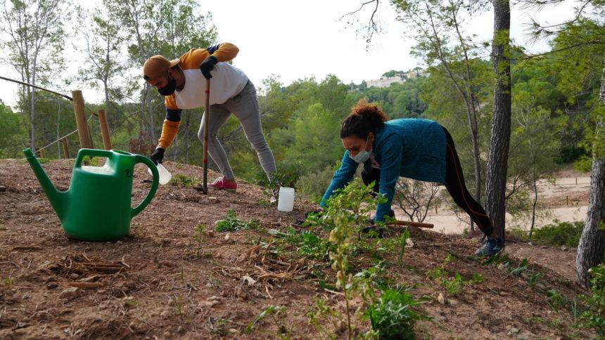 Medi Ambient, el ayuntamiento de Palma y Cruz Roja colaboran en la reforestación de una parte del bosque de Bellver